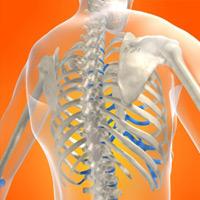 Снижение уровня тестостерона приводит к остеопорозу